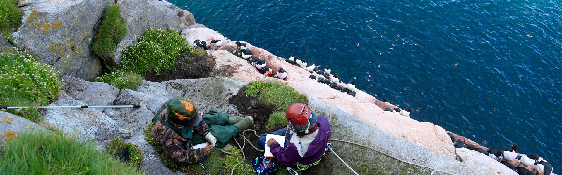 Emily Choy (McGill University) and Josiah Nakoolak observing thick-billed murres on the cliffs of Coast Island