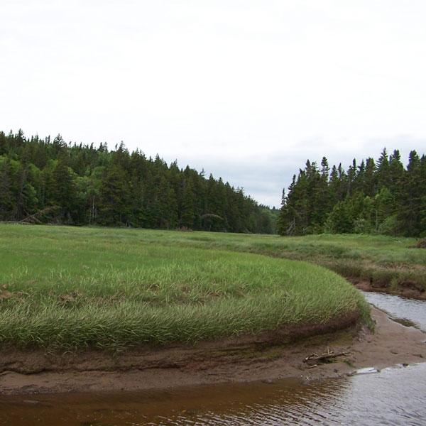 Photo d'un marais salé de la baie de Fundy
